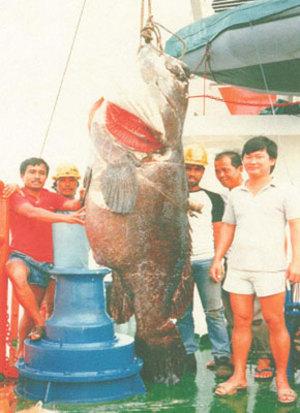 Grouper300kg12